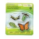 Safari S622616 Lebenszyklus eines Monarchfalters (Set)