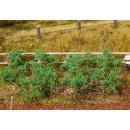 FALLER (181259) 18 Tomatenpflanzen
